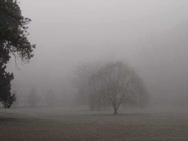 Niebla y frio.