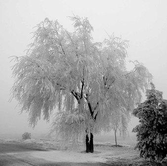 Frio Invierno