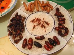 Insectos como alimento